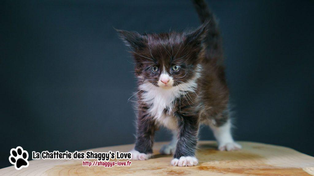 DSC03090-shaggys-love