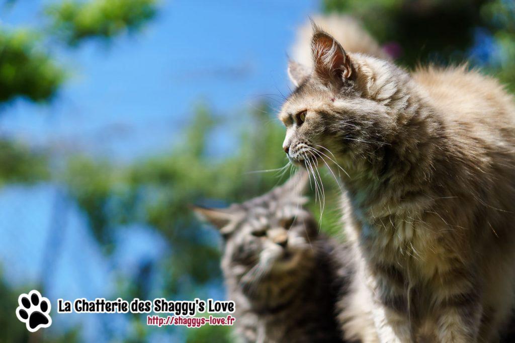 DSC03237-shaggys-love