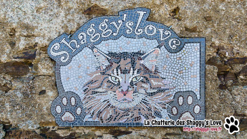 DSC03287-shaggys-love